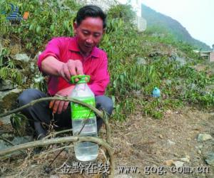 种金银花的贵州村官感动共和国总理