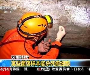 [视频]双河洞科考 探洞过程发现不明生物