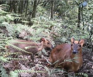 绥阳县宽阔水发现赤麂、红喉姬鹟、褐胸噪鹛